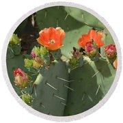 Orange Dream Cactus Round Beach Towel