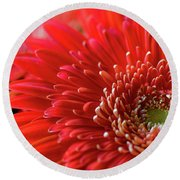 Round Beach Towel featuring the photograph Orange Gerbera by Clare Bambers