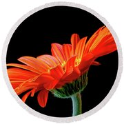Orange Gerbera On Black Round Beach Towel