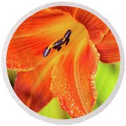 Orange Lilly Of The Morning Round Beach Towel