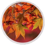Round Beach Towel featuring the photograph Orange Maple Leaves by Clare Bambers