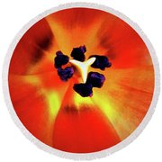 Round Beach Towel featuring the photograph Orange Orchid by Kelly Mills