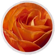 Orange Rose 2 Round Beach Towel by Steve Purnell