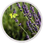 Round Beach Towel featuring the photograph Orange Sulfur N Lavender by Rod Best