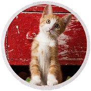 Orange Tabby Kitten In Red Drawer  Round Beach Towel