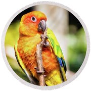 Orange Yellow Parakeet Round Beach Towel