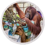 Orangutan In Rope Net Round Beach Towel