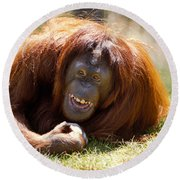 Orangutan In The Grass Round Beach Towel