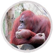 Orangutang Contemplating Round Beach Towel