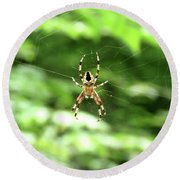 Orb Weaver Round Beach Towel