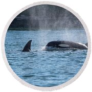 Orca Blowing Round Beach Towel