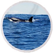 Orca Round Beach Towel