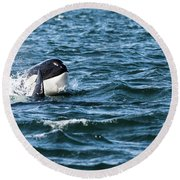 Orca Whale Round Beach Towel