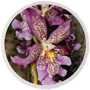 Orchid 347 Round Beach Towel