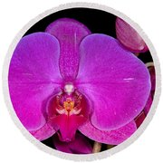Orchid 424 Round Beach Towel