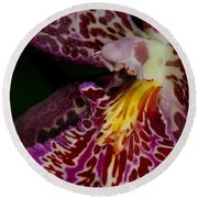 Orchid 459 Round Beach Towel