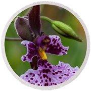 Orchid - Caucaea Rhodosticta Round Beach Towel