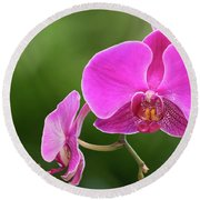 Orchid In Pink Round Beach Towel