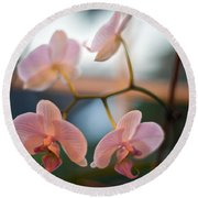 Orchid Menage Round Beach Towel