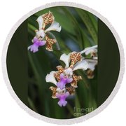 Orchid Vanda Tricolor 2 Round Beach Towel