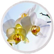 Orchid With Sky Background Round Beach Towel