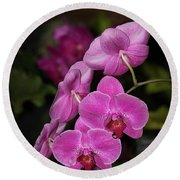 Round Beach Towel featuring the photograph Orchids Alicia by The Art of Alice Terrill
