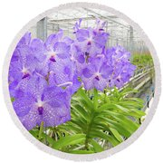 Orchids In A Greenhouse Round Beach Towel