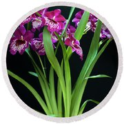 Orchids Miltonia Round Beach Towel