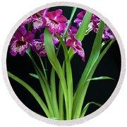 Orchids Miltonia Round Beach Towel