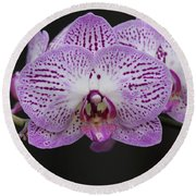 Orchids On Black Round Beach Towel