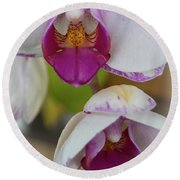 Orchids Up Close Round Beach Towel