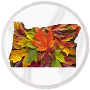 Oregon Maple Leaves Mixed Fall Colors Background Round Beach Towel