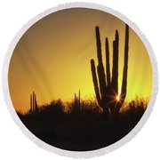 Organ Pipe Cactus Round Beach Towel
