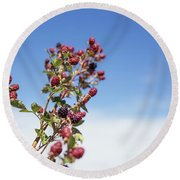 Organic Handpicked Home Orchard Raspberries,blackberries From Bu Round Beach Towel by Jingjits Photography