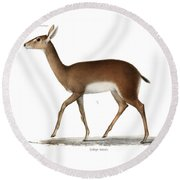Round Beach Towel featuring the drawing Oribi, A Small African Antelope by J D L Franz Wagner