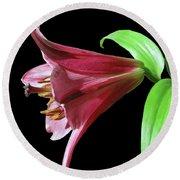 Oriental Trumpet Hybrid Lily Round Beach Towel