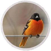 Oriole On The Line Round Beach Towel