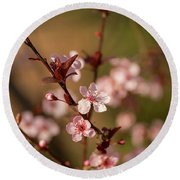 Purple Leaf Sandcherry Blossoms 2 Round Beach Towel