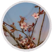 Purple Leaf Sandcherry Blossoms Round Beach Towel