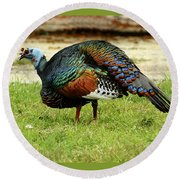 Oscillated Turkey Round Beach Towel by Kathy McClure