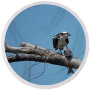 Osprey And Fish Round Beach Towel