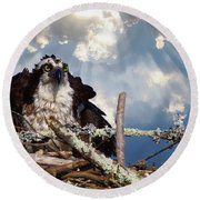 Osprey Angry Round Beach Towel