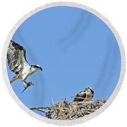 Osprey Brings Fish To Nest Round Beach Towel