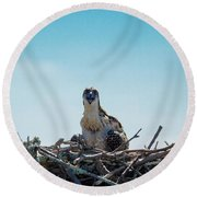 Osprey Chick Smiles For The Camera Round Beach Towel by Jeff at JSJ Photography