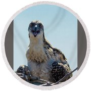 Osprey Chick Smiles For The Camera Macro Round Beach Towel by Jeff at JSJ Photography