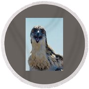 Osprey Chick Smiles For The Camera Ultra Macro Round Beach Towel by Jeff at JSJ Photography