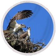 Osprey Chicks Ready To Fledge Round Beach Towel
