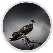 Round Beach Towel featuring the photograph Osprey by Chrystal Mimbs