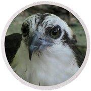 Osprey Portrait Round Beach Towel