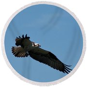 Osprey Fledging Time Round Beach Towel